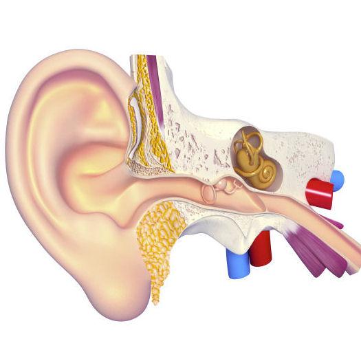 La presbyacousie compensée par un appareil auditif.